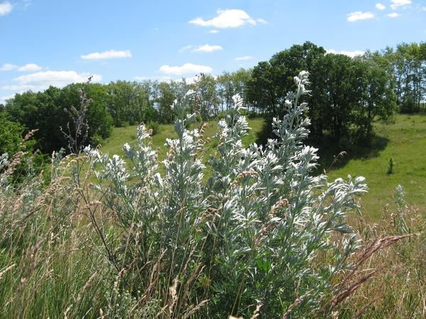Отвары при геморрое: лечение геморроя травами в домашних условиях